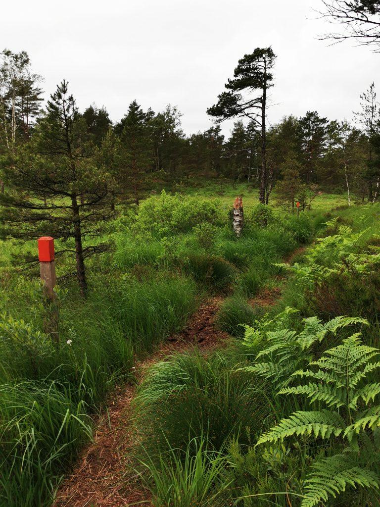 I Herrestadsfjället turas små berg, tallskog och myrmark om utrymmet - vilket är en otroligt vacker blandning