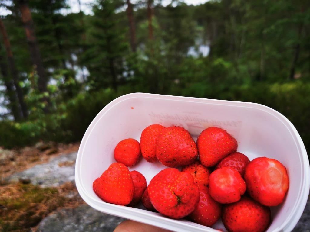 Om förstörelsen visste jag ingenting när jag satt bakom Kölnestugan och åt mina jordgubbar
