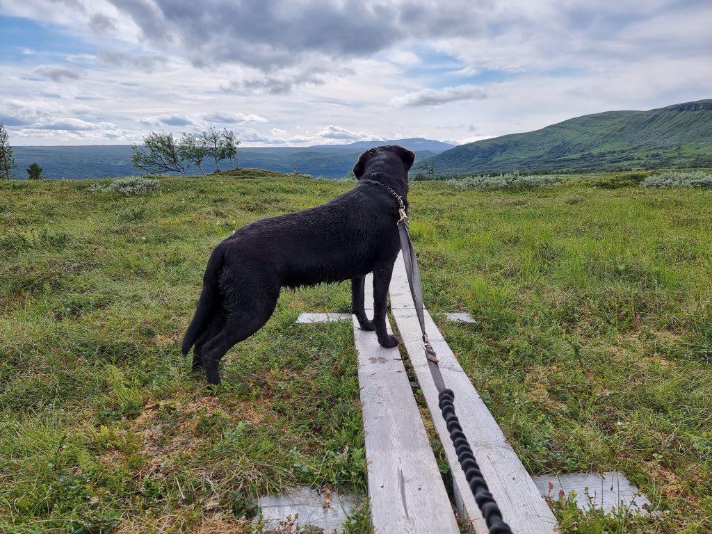 Mitt vandringssällskap Wilma på Andersborgturen