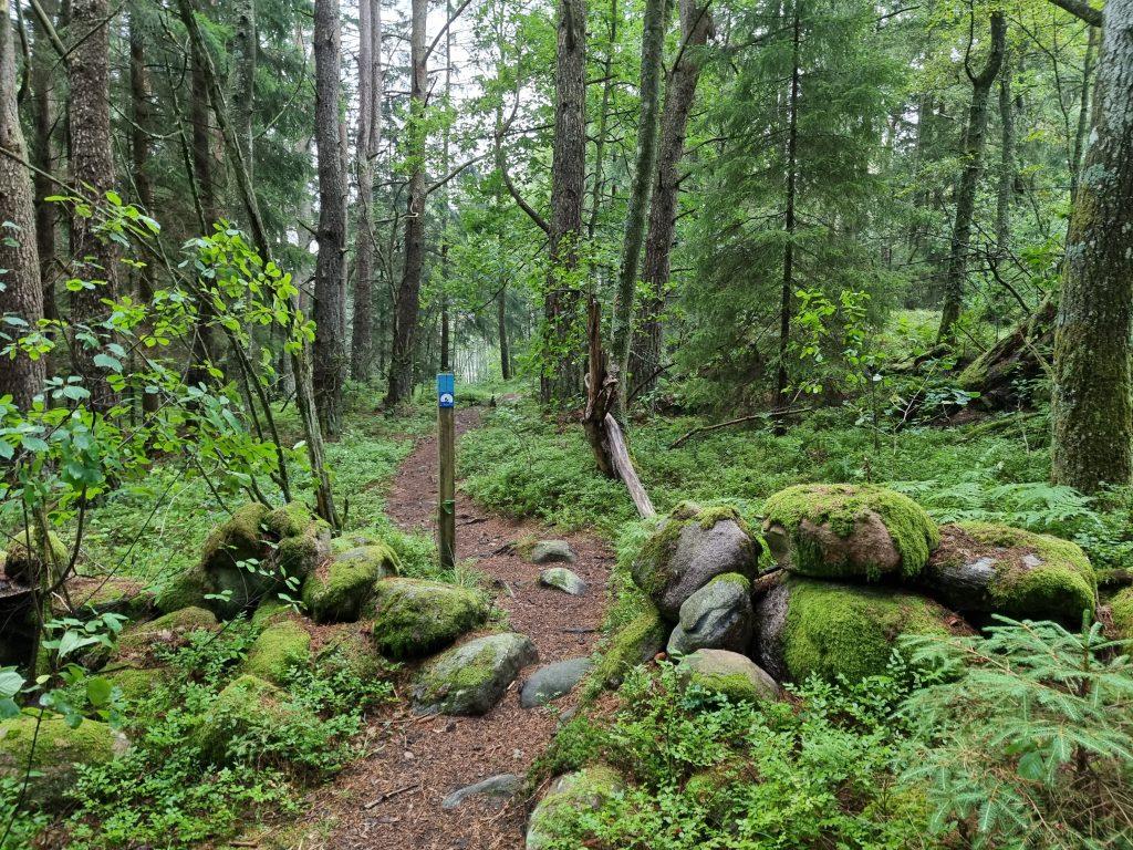 En del av vandringsleden Orust Tvärs (här etapp 6 av Kuststigen) - bara någon kilometer från vårt hus