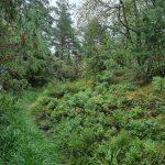 En stor del av Orust Tvärs går genom skog och förbi ängar och hagar