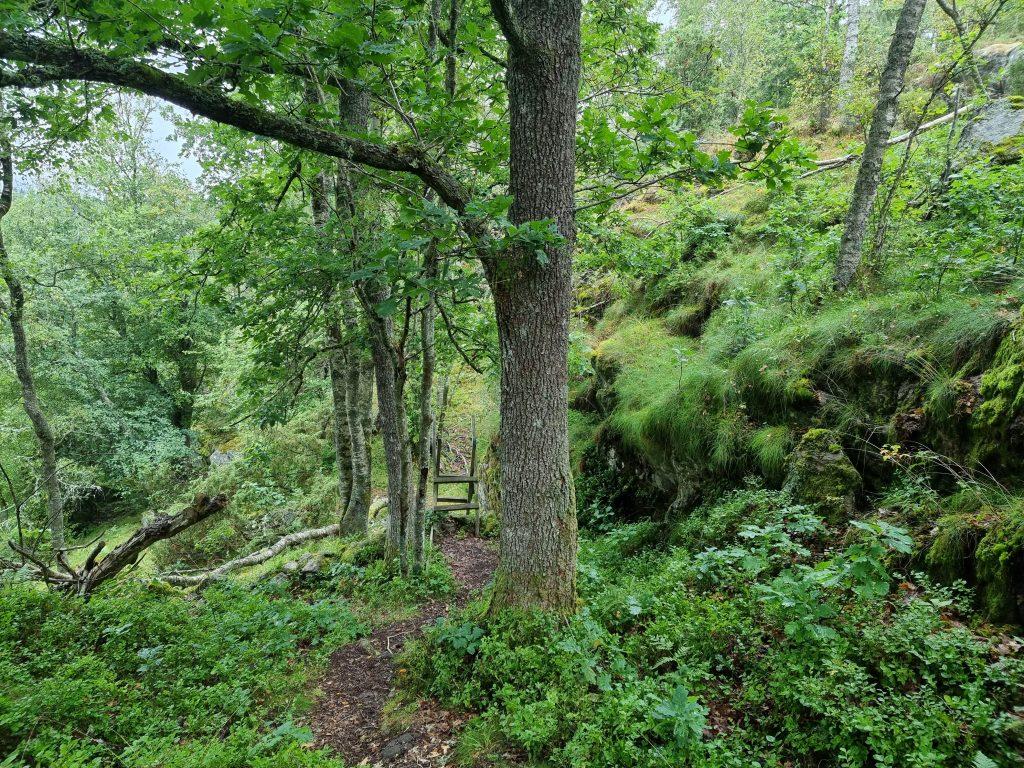 Orust Tvärs går genom grönskande hagar