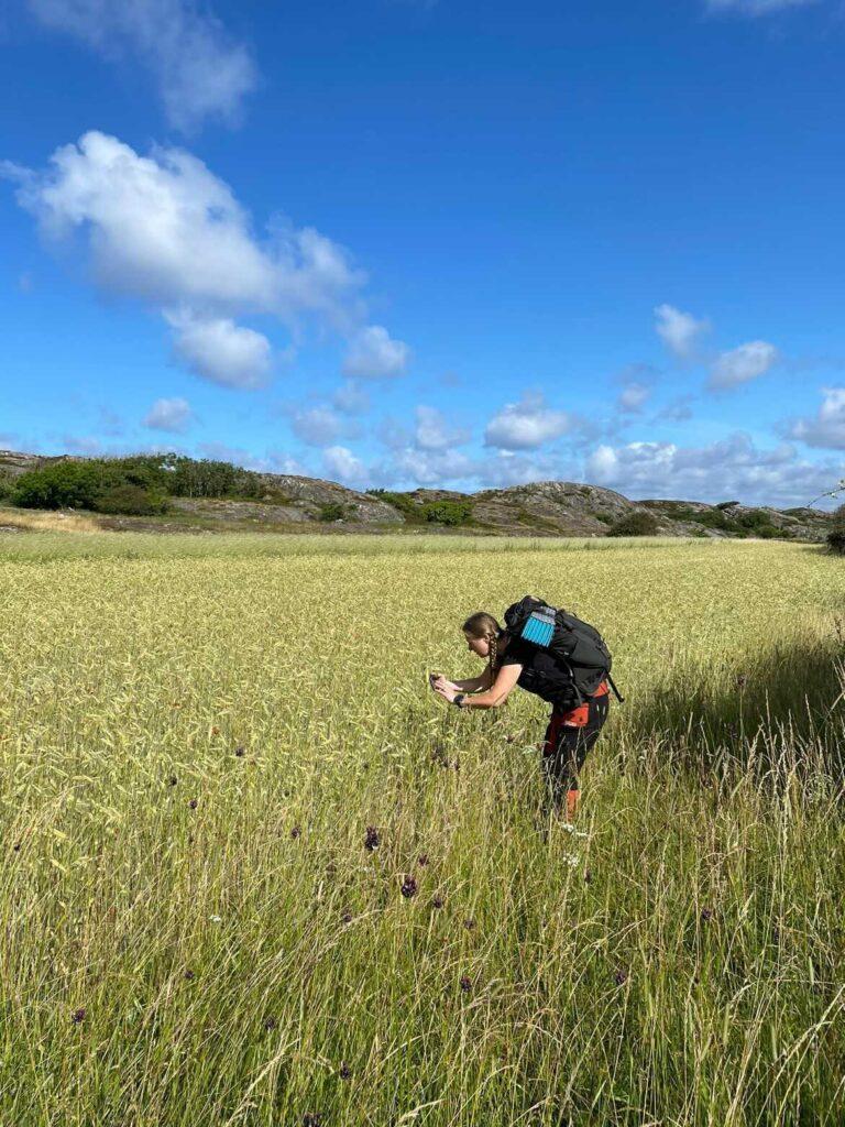 Här fotar jag vid Änga - observera att jag inte står i det odlade fältet - utan precis i kanten