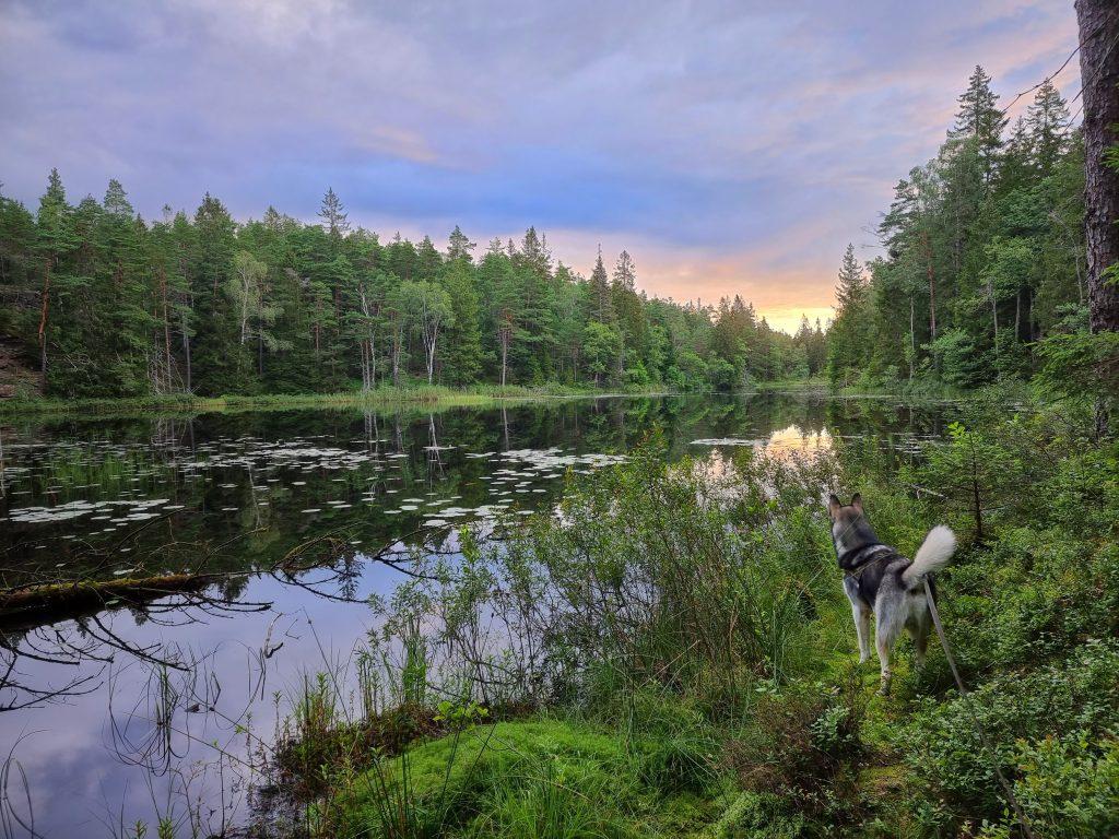 Från morgonturen i Herrestadsfjällets naturreservat / längs Bohusleden etapp 15 efter vindskyddsnatt