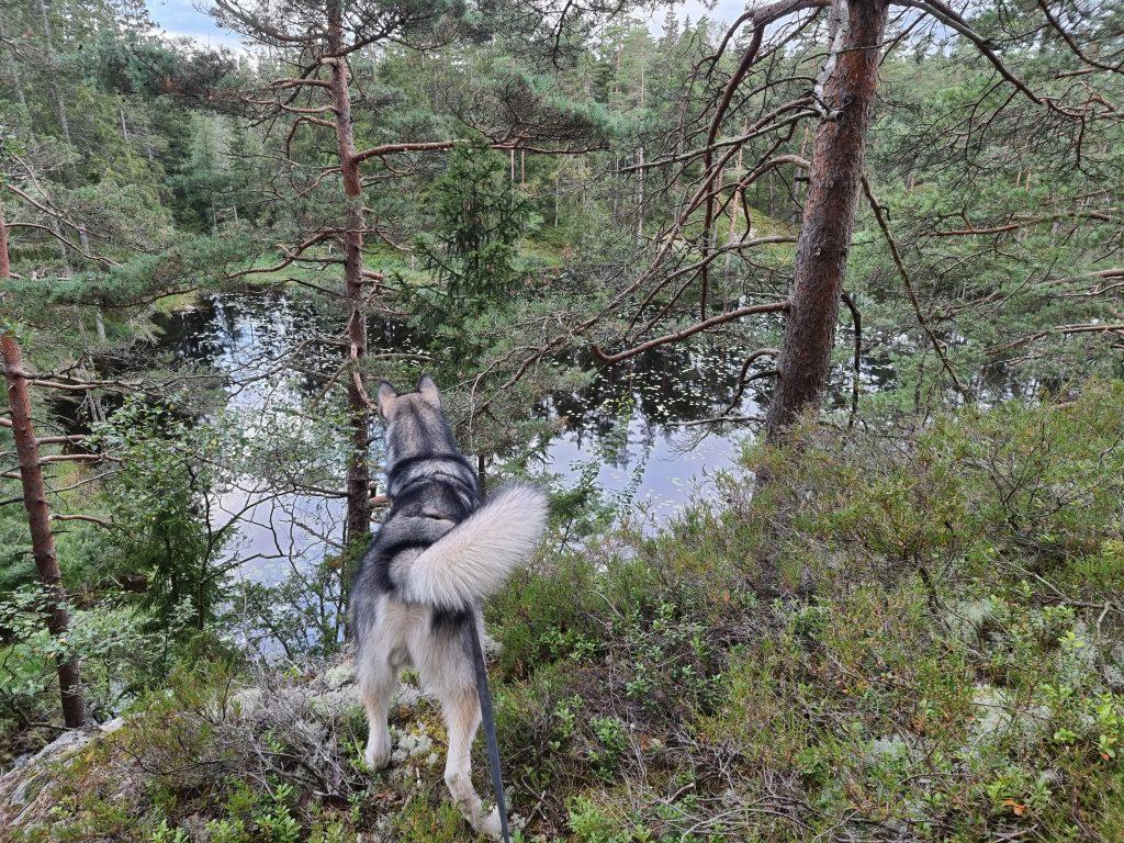 Ännu en av sjöarna längs vandringsleden