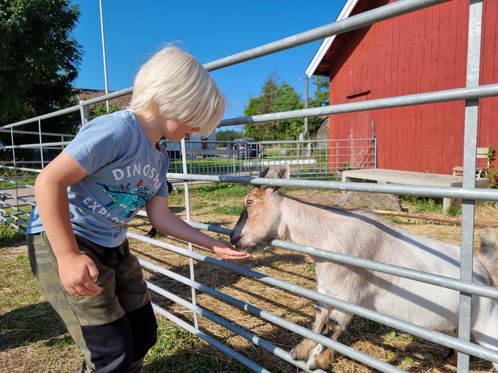 Före kamelridningen fick vi följa med och mata djuren