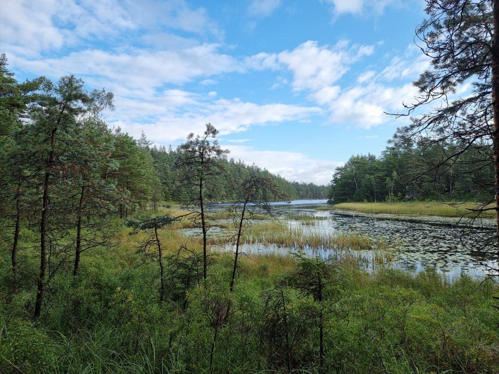 I södra änden av Kroksjön är det våtmarker
