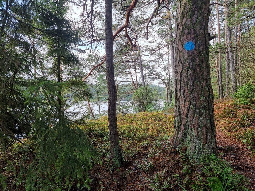 Tack vare stigen som går runt hela Kroksjön är det lätt att ta sig fram