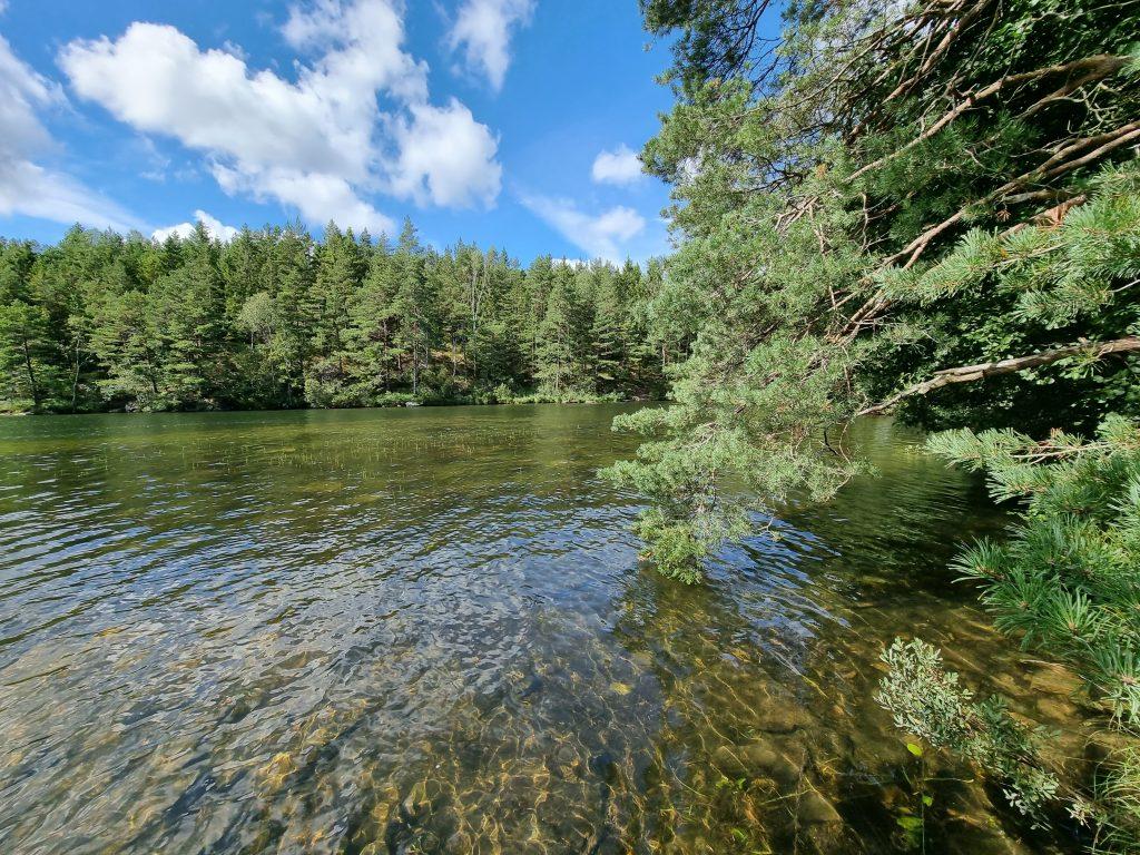 Mossig sagoskog - och många sjöar