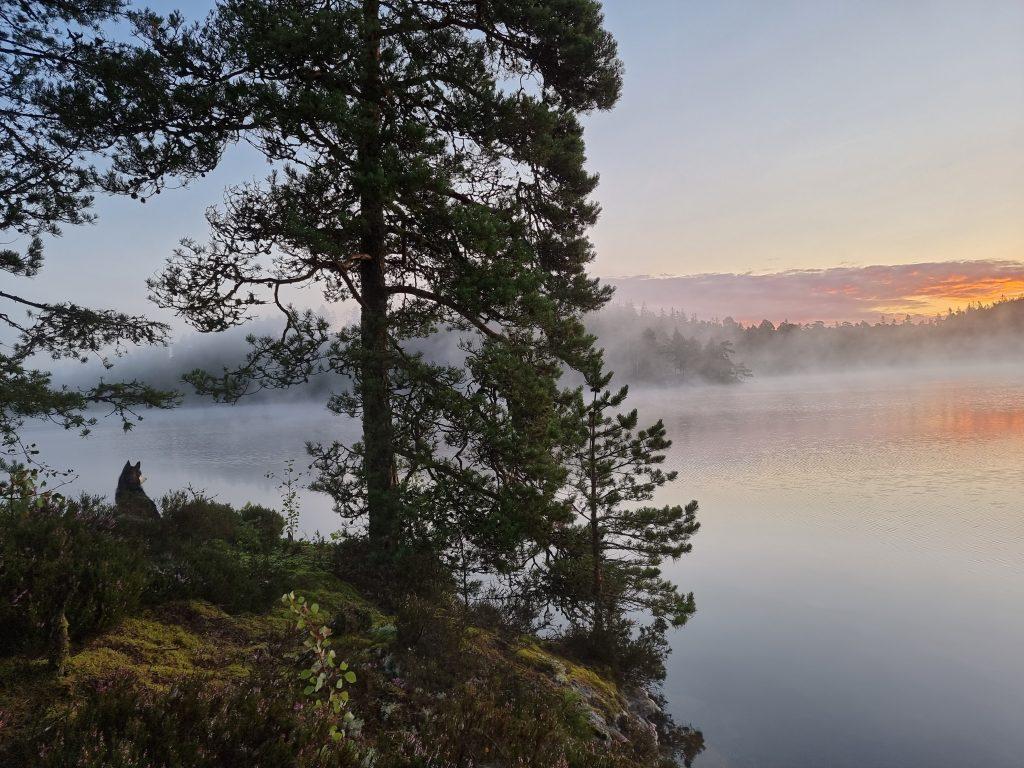 Mer dimma över udden, Gårdsjön