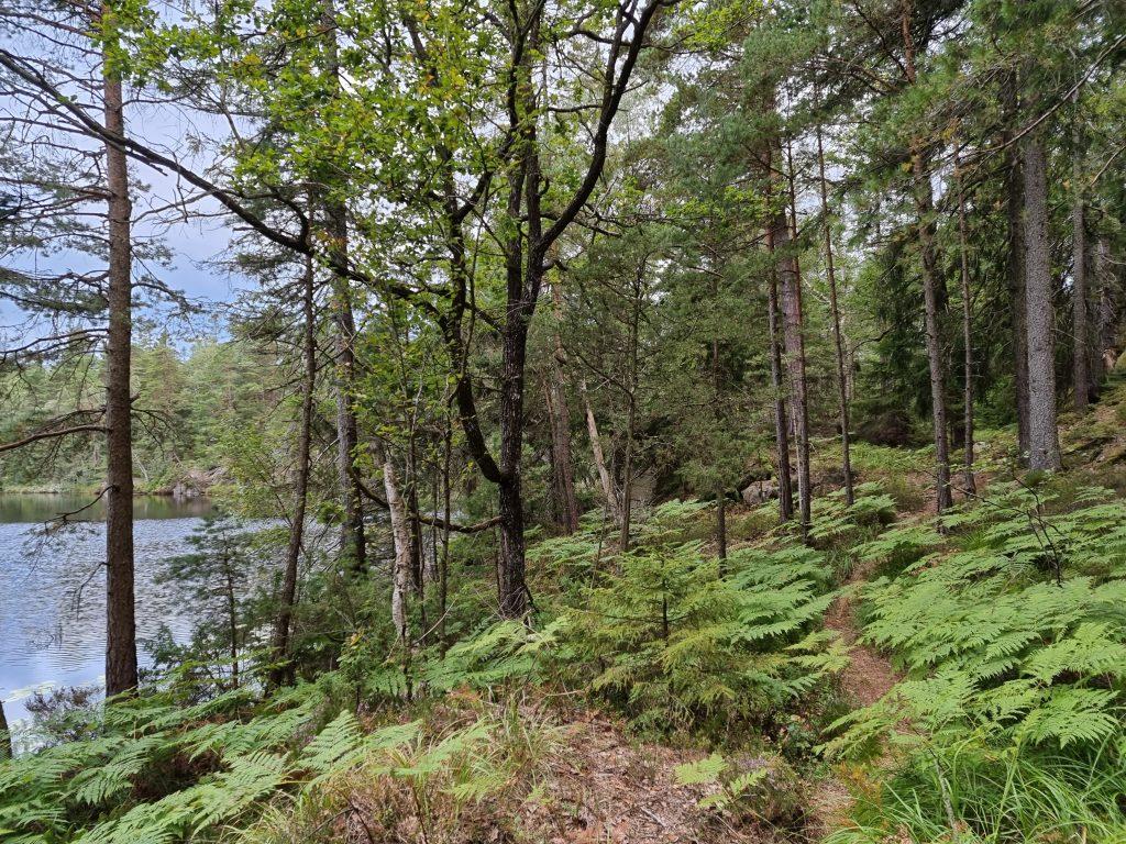 På andra sidan sjön var det en annan naturtyp - underbar mitt-i-veckan-tur
