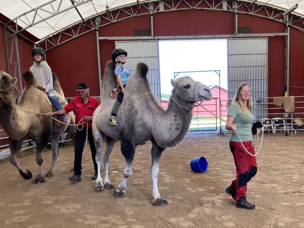 Alltså, jag känner mig som värsta kamelskötaren!