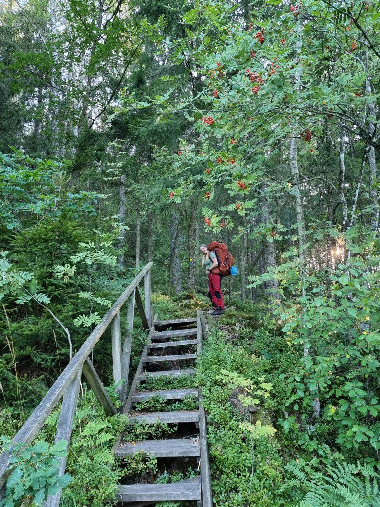På väg upp på Lyseberg - innan vi når Lysevattnet