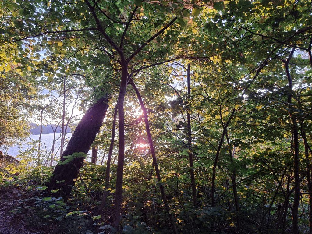 Solens första strålar genom lövverket