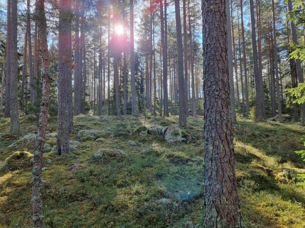 Sagolika utflykter i de härliga skogarna i Marianelund